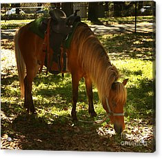Brown Horse Acrylic Print by Blink Images