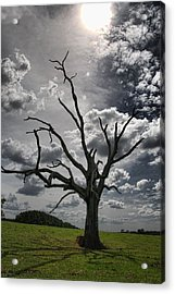 By The Light Of The Moon Acrylic Print by Jan Amiss Photography