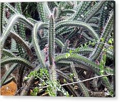 Acrylic Print featuring the digital art Cactus by Vicky Tarcau