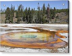 Chromatic Pool Hot Spring, Upper Geyser Acrylic Print by Richard Roscoe