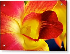 Acrylic Print featuring the photograph Dendribium Malone Or Hope Orchid Flower by Perla Copernik