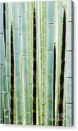 Detail Of Bamboo In A Forest Acrylic Print by Jeremy Woodhouse