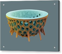 Diatom, Sem Acrylic Print by David Mccarthy