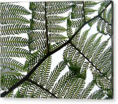 Ferns Acrylic Print by Sylvie Leandre
