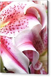 Flower Close Up Acrylic Print by Ignaz Uri
