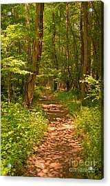 Forest Trail Acrylic Print by Bob and Nancy Kendrick