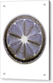 Fossil Diatom, Light Micrograph Acrylic Print by Frank Fox