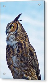 Great Horned Owl Acrylic Print by Linda Pulvermacher
