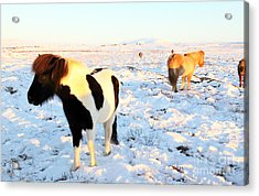 Acrylic Print featuring the photograph Iceland by Milena Boeva
