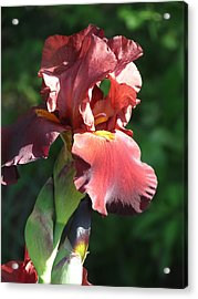 Acrylic Print featuring the photograph Iris by Rebecca Overton