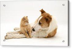 Kitten And Dog Acrylic Print by Jane Burton