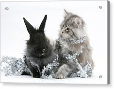 Kitten And Rabbit Getting Into Tinsel Acrylic Print by Mark Taylor