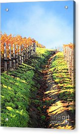 Late Autumn In Napa Valley Acrylic Print by Ellen Cotton