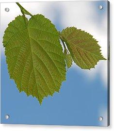 Leaf Acrylic Print by Design Windmill
