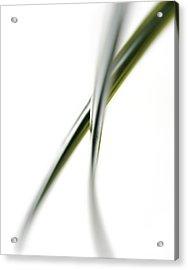 Leaves Acrylic Print by Gavin Kingcome