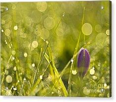 Light Flowers Acrylic Print by Odon Czintos