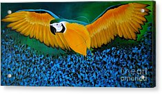 Macaw On The Rise Acrylic Print