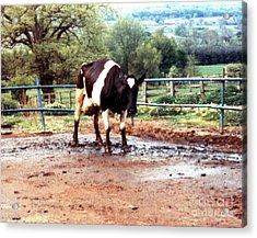 Mad Cow Disease Acrylic Print by Science Source