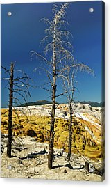 Mammoth Upper Terrace Acrylic Print by Greg Norrell
