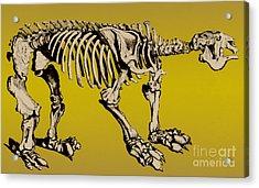 Megatherium, Extinct Ground Sloth Acrylic Print by Science Source