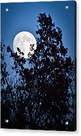Moon Night Acrylic Print by Jiayin Ma