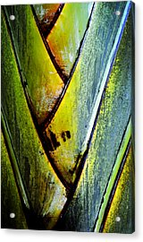 Palm Leaves Acrylic Print by Frank DiGiovanni