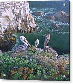 Pelican Point Acrylic Print by Lorna Saiki