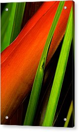 Acrylic Print featuring the photograph Photograph Of A Parrot Flower Heliconia by Perla Copernik