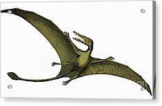 Pterodactyl Extinct Flying Reptile Acrylic Print by Science Source