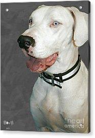 Shelter Dogs Acrylic Print