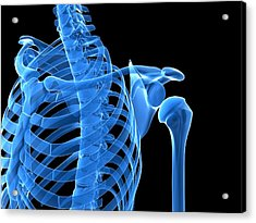 Shoulder Bones, Artwork Acrylic Print by Sciepro