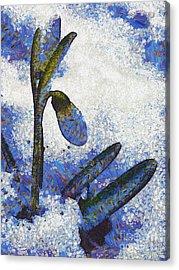 Snowdrop Acrylic Print by Odon Czintos