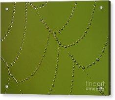 Spiderweb Acrylic Print by Odon Czintos