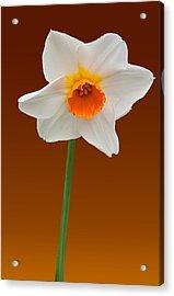 Spring Bulb Acrylic Print