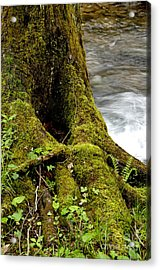 Spring Monongahela National Forest Acrylic Print by Thomas R Fletcher