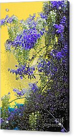 Acrylic Print featuring the photograph Sun Setting On Wisteria by Holly Martinson