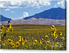 Sunflowers Sand N Sky Acrylic Print by Scotts Scapes