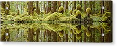 Swamp Acrylic Print by David Nunuk