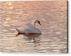 Swan In The Lake Acrylic Print by Odon Czintos