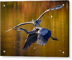 The Chase Acrylic Print by Brian Stevens