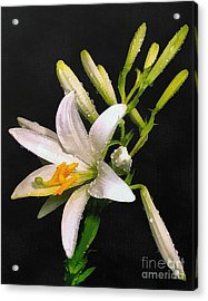 The Lily Acrylic Print by Odon Czintos