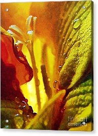 The Pistils Acrylic Print by Odon Czintos