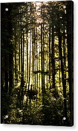 Untitled Acrylic Print by Kimberly Deverell