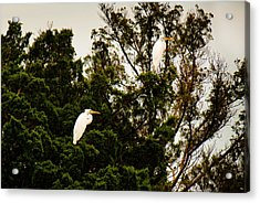 Untitled Acrylic Print by Michael Ray