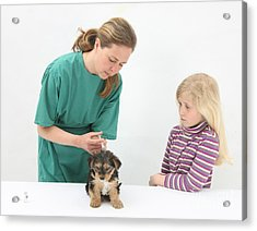 Vet Giving Pup Its Primary Vaccination Acrylic Print by Mark Taylor