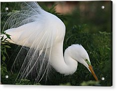 White Egret Acrylic Print by Jeanne Andrews