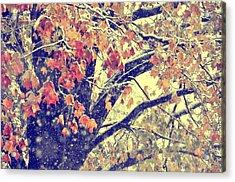 Winter Autumn Snows Acrylic Print by JAMART Photography