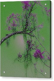 Acrylic Print featuring the photograph Wisteria by Holly Martinson