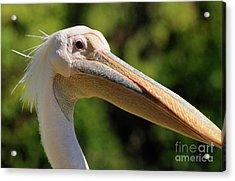 Pelican Acrylic Print by Marc Bittan