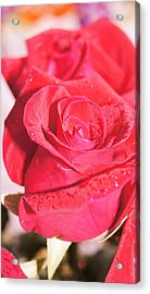 Rose Acrylic Print by Gornganogphatchara Kalapun